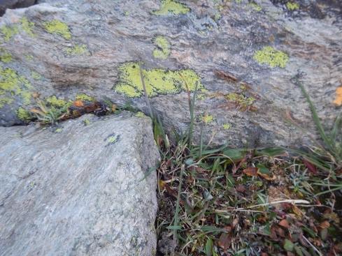 A cute little lichen caterpillar